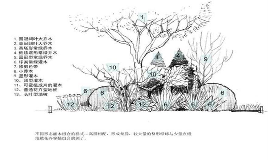 景观手绘乔木线稿图片
